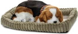 perfect-petzzz-beagle-400x400-imadrg4wzkg9vgcs